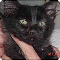 Adopt A Pet :: Little Man - Pendleton, OR