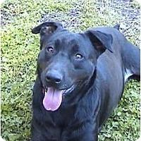 Adopt A Pet :: Belladonna - Mocksville, NC