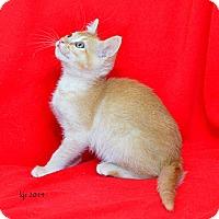 Adopt A Pet :: Junie Moon - Davis, CA