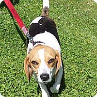 Adopt A Pet :: Lucy - Chewelah, WA