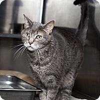 Adopt A Pet :: Buddy - Lombard, IL