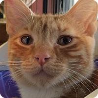 Adopt A Pet :: Garfield - Bear, DE