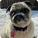Adopt A Pet :: Stella Bean - Pending Adoption