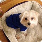 Adopt A Pet :: Gizmo
