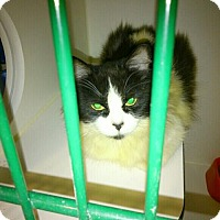 Adopt A Pet :: Katarina - Hamilton, ON