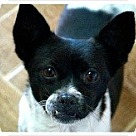 Adopt A Pet :: Sour