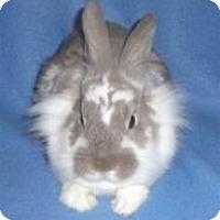 Adopt A Pet :: Caramel - Woburn, MA