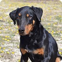 Adopt A Pet :: Roscoe - Larned, KS