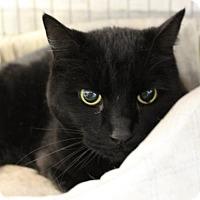 Adopt A Pet :: Panther - Hopkinton, MA