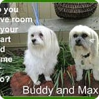 Adopt A Pet :: Buddy and Maxie - Shawnee Mission, KS