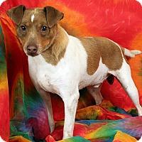 Adopt A Pet :: Link Russel - St. Louis, MO