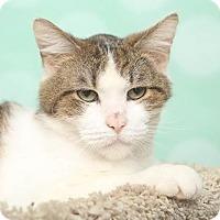 Adopt A Pet :: Wilbur - Chippewa Falls, WI
