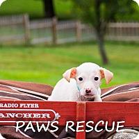 Adopt A Pet :: Dakota - Forest Hill, MD
