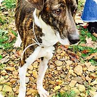 Keely S Friends Dog Rescue Address