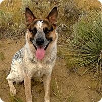 Adopt A Pet :: Boone - Cody, WY