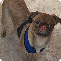 Adopt A Pet :: Betty Davis - Bend, OR