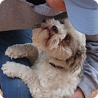 Adopt A Pet :: Vixey - Albany, NY