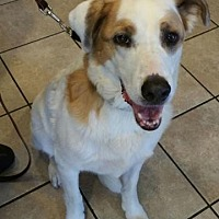 Adopt A Pet :: Murphee - Scottsdale, AZ