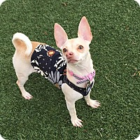 Adopt A Pet :: Barbie - Las Vegas, NV