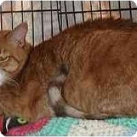 Adopt A Pet :: Murphy - Clementon, NJ