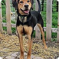 Adopt A Pet :: Bogey - DeKalb, IL