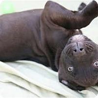 Adopt A Pet :: Jaxon - Richmond, VA