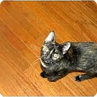 Adopt A Pet :: Sadie - Xenia, OH