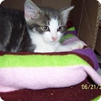 Adopt A Pet :: Rex - Island Park, NY