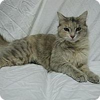 Adopt A Pet :: Celia - East Hanover, NJ
