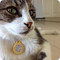 Adopt A Pet :: Vaper - Vancouver, BC