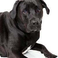 Adopt A Pet :: Jackson - Metairie, LA
