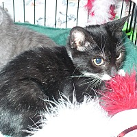 Adopt A Pet :: Dudley -Adoption Pending! - Colmar, PA