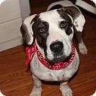 Adopt A Pet :: Kenya - In New England
