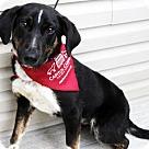 Adopt A Pet :: Archie *Has Application*