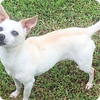 Adopt A Pet :: Cornelia - Sneads Ferry, NC