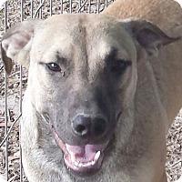 Adopt A Pet :: Zelda & Bitsy AD 03-26-16 - Preston, CT