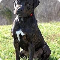 Adopt A Pet :: Major - Waldorf, MD