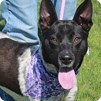 Adopt A Pet :: Hazel - Garfield Heights, OH