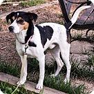 Adopt A Pet :: Bennie