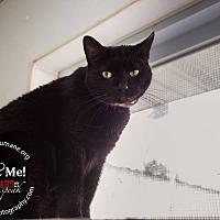 Adopt A Pet :: Black Jack - Mohawk, NY