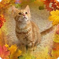 Adopt A Pet :: Cedric - Cincinnati, OH