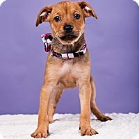Adopt A Pet :: Monti - Houston, TX