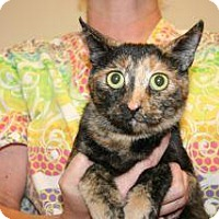 Adopt A Pet :: Goldie - Wildomar, CA