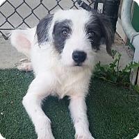Adopt A Pet :: Stewart - Dallas, TX