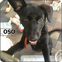 Adopt A Pet :: Oso (in adoption process) - El Cajon, CA