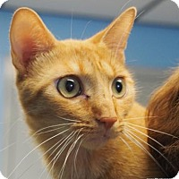 Adopt A Pet :: Leggs - Lincolnton, NC