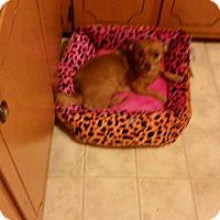 Adopt A Pet :: Sasha - Lexington, NC