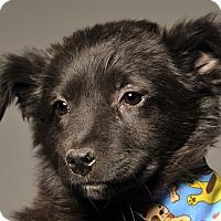 Adopt A Pet :: Nevada - Crossville, TN