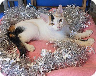 Calico Kitten for adoption in Glendale, Arizona - Sara