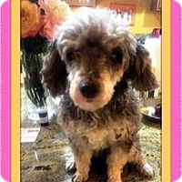 Adopt A Pet :: Candee - Rancho Cucamonga, CA